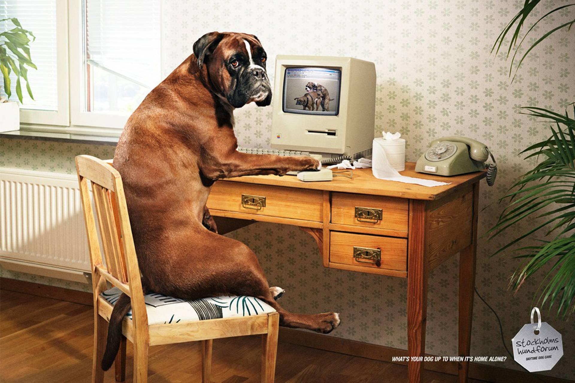 cachorro sentado numa cadeira no computador