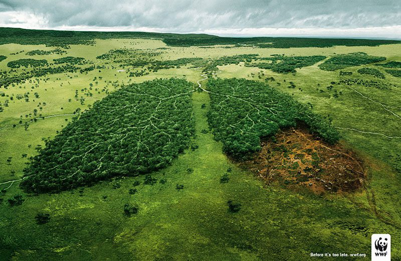 anúncio dia do ambiente