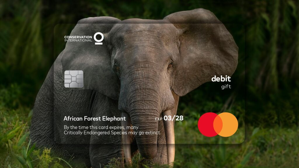 cartão elefante mastercard animais em extinção