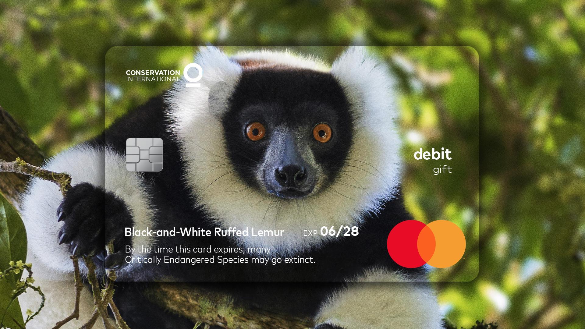 cartão lemur mastercard animais em extinção