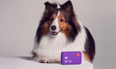cachorro Nu.Dog
